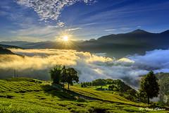 朝陽_DSC8849N (何鳳娟) Tags: 武界 日出 茶園 雲海 星芒 山岳 樹木 藍天白雲 風景 夜景