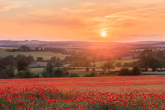 Cotswold Popies (LongLensPhotography.co.uk - Daugirdas Tomas Racys) Tags: cotswold cotswolds stow poppies field countryside england landscape evening sunset popyfield poppyfield rollinghills summer sun setting july red color