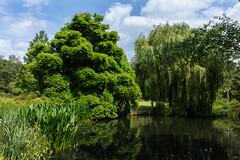 Thomson's Pond, Isabella Plantation (tonybill) Tags: isabellaplantation london places sigma135mmf18artfe sonya7riii sonyfe28mmf2 richmondpark