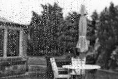 Week 28 Shoot Standard Lens in B&W (Carol Dunham) Tags: projectsunday standardlens blackandwhite garden