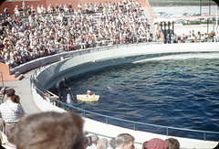 Marineland of the Pacific (jericl cat) Tags: marineland pacific aquatic park theme oceanic palosverdes losangeles dolphine whale tank audience poodle dog boat photo slide