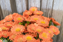 Washington grown flowers (Washington State Department of Agriculture) Tags: june summer wsdagov washingtonstatedepartmentofagriculture agriculture flower flowers washington washingtonstate wsda