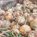 Packing Walla Walla Sweet Onions