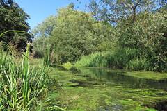 Pocklington Canal at Hagg Bridge (erdragonfly) Tags: 11july2019