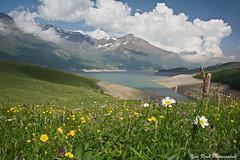 Printemps en Savoie (yves floret) Tags: savoie hautemaurienne montcenis lac fleurs eau montagne neige ciel nuages ombres