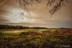 National Park De Maasduinen, Netherlands (Stathis Iordanidis) Tags: nationalpark demaasduinen netherlands nature amazinglandscape sunset sundown sunlight sun
