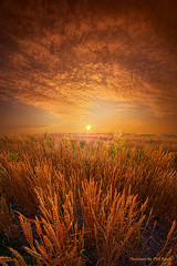 The Day Begins Here (Phil~Koch) Tags: life mood emotions country rural outdoors colors living heaven weather horizons lines landscape art meadow sky sunset clouds scenic vertical photography office portrait serene morning dawn nature natural environment inspired inspirational season beautiful hope love joy dramatic unity trending popular canon fineart arts shadow sun sunrise light peace wisconsin shadows endless earth sunlight horizon pastel spring green golden orange wheat crop agriculture farming