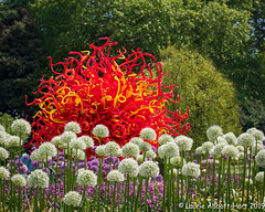 20190516 Pin Cushions 27188-Edit (Laurie2123) Tags: chihuly fujixt2 kewgardens laurieabbotthart laurietakespics laurie2123 london reflectionsonnature vacation