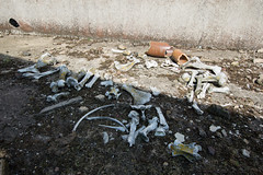 DSC_0101 (SubExploration) Tags: explosives factory explosivesfactory ww1 decay abandoned explore exploring