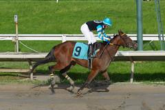 Top Hat Hustle (Quinones, Luis) (avatarsound) Tags: boston suffolkdowns suffolkdownssendoff horse horseracing horses jockey jockeys race racetrack racing rider riding sport