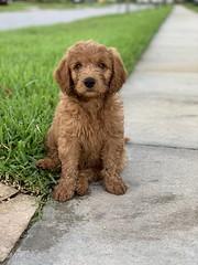Cooper being cute