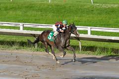 Catauga County (Hernandez Sanchez, Andy) (avatarsound) Tags: boston suffolkdowns suffolkdownssendoff horse horseracing horses jockey jockeys race racetrack racing rider riding sport