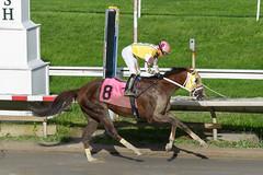 Admiration (Gomez, Kevin) (avatarsound) Tags: boston suffolkdowns suffolkdownssendoff horse horseracing horses jockey jockeys race racetrack racing rider riding sport