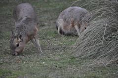 Variate (CARLUCHO VILLAR) Tags: tandil finde lunes pajaro verde gente faces animales pik cook aguila mara pecho rojo