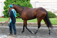 Top Hat Hustle (avatarsound) Tags: boston suffolkdowns suffolkdownssendoff horse horseracing horses jockey jockeys race racetrack racing rider riding sport