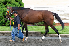 Shiloh Lane (avatarsound) Tags: boston suffolkdowns suffolkdownssendoff horse horseracing horses jockey jockeys race racetrack racing rider riding sport