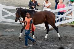 Makeanentrance (avatarsound) Tags: boston suffolkdowns suffolkdownssendoff horse horseracing horses jockey jockeys race racetrack racing rider riding sport