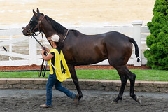 Colonial Front (avatarsound) Tags: boston suffolkdowns suffolkdownssendoff horse horseracing horses jockey jockeys race racetrack racing rider riding sport