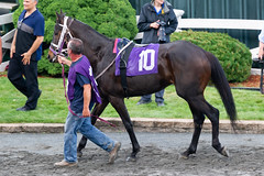 Bit the Bullet (avatarsound) Tags: boston suffolkdowns suffolkdownssendoff horse horseracing horses jockey jockeys race racetrack racing rider riding sport