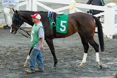 Catauga County (avatarsound) Tags: boston suffolkdowns suffolkdownssendoff horse horseracing horses jockey jockeys race racetrack racing rider riding sport