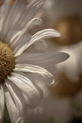 Una mujer puede amar tanto como si nunca fuera a irse. Pero puede llegar el día que se vaya como si nunca hubiera amado. (Elena m.d.) Tags: nikon d5600 sigma sigma105