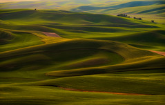Patterns of the Palouse (NW Vagabond) Tags: palouse green fields farmland wheat peas eastern washington 2019 landscape vibrant spring