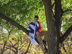 chicago cubs world series parade. november 2016 (timp37) Tags: kid flag cape tree chicago illinois november 2016 climbing cubs world series parade baseball w win