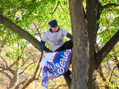 chicago cubs world series parade. 2016 (timp37) Tags: tree kid flag baseball world series parade chicago illinois november 2016