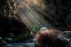 Early morning light (Maureen Pierre) Tags: light early morning rays christchurchbotanicgardens winter sun