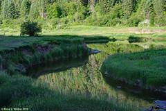 Little Salmon River (walkerross42) Tags: littlesalmonriver river reflections morning green newmeadows idaho scurve water trees forest pentaxart