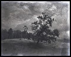 Lone tree (Mark Dries) Tags: markguitarphoto markdries largeformat graflex expired expiredin1980 plusx 4x5 negativescan tree middenduin