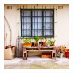 Herb Garden (Daniela 59) Tags: window barred pots plants potplants herbs flowers farm cottage hillanddale stellenbosch southafrica danielaruppel