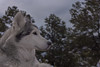 Aurora (Cruzin Canines Photography) Tags: animal animals aurora canon canoneos5ds canon5ds canine dog dogs pet pets husky huskies alaskanhusky siberianhusky outdoors outside nature naturallight naturepreserve gardenofthegods colorado coloradosprings portrait