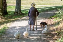 Parc de loisirs de l'étang du Lou à Dolo (Dicksy93) Tags: img1007 outdoor du lou extérieur etang dolo côtes france canon eos 22 brittany europe bretagne breizh catherine sp 7d di tamron vc olivier usd darmor a011 f563 150600mm dicksy93 duck personne canard dog chien animal promenade faune