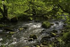 DaneAgain (Tony Tooth) Tags: nikon d7100 nikkor 40mm river riverdane stream creek danebridge staffs staffordshire countryside