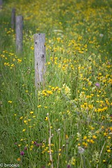 Fence and Flower Power (brookis-photography) Tags: fence flowers meadow yellow