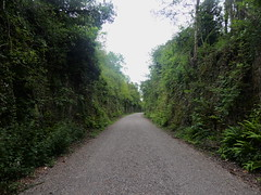 Railway cutting between Clowne and Creswell    (Former Staveley - Creswell line)   July 2019 (dave_attrill) Tags: cutting rock creswell disused railway line trackbed passenger goods abandoned clowne poolsbrook staveleytocreswell midland chesterfield derbyshire path cyclepath bridleway resurfaced july 2019