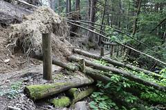 Trees on the Trail (Luca Bobbiesi) Tags: wood bosco nature trees trail sentiero trentinoaltoadige piandeipradi alberisdradicati canoneos5dmarkiv canonef1740mmf4lusm