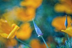 spike (ang-yan) Tags: pentacon av 128100mm ©angel yanev mf projector lens