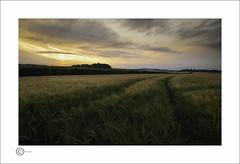 New Wheat (Clicker_J) Tags: colour darkclouds fields farm golden grass greens highlight harvest landscape lighting lowlight nikon rustic shadows sunlight sunshine wheat