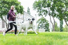 ulkoilemassa koiran kanssa (VisitLakeland) Tags: finland kuopio kuopiotahko lakeland summer animal dog eläin kaupunki keskusta kesä koira luonto outdoor sekarotuinen street streetview