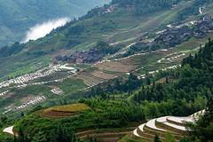 DSC03879 (hamad M) Tags: longsheng rice terrace china guilin yangshuo travel sonya7iii 24105mm landscape nature