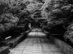 The pathway. Explored. (Tim Ravenscroft) Tags: pathway museum wooded jotenkaku shokokuji kyoto japan hasselblad hasselbladx1d monochrome blackandwhite blackwhite