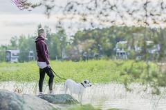 with a dog on the shore of a lake (VisitLakeland) Tags: finland kallavesi kuopio kuopiotahko lakeland summer animal dog eläin järvi kesä koira lake luonto maisema nature outdoor scenery sekarotuinen
