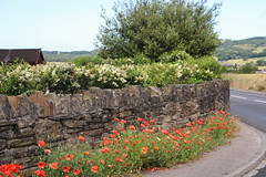 Poppy Bend - Crank England (big_jeff_leo) Tags: flowers florida walls stone england english rural countryside lancashire