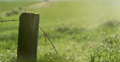 Heatwave ..... (Elisafox22) Tags: elisafox22 sony nex7 helios442 helios lomo madeinussr 258 8blade vintagelens fencefriday hff fencedfriday sunshine sparkle bokeh wood wooden fencepost garden heatwave wire barbedwire outdoors elisaliddell©2019 grass field weeds flowers tistheseason