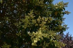 Loreak (eitb.eus) Tags: eitbcom 1548 g151883 tiemponaturaleza tiempon2019 bizkaia durango nereaayarzaguenaaguirre