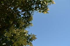 Loreak (eitb.eus) Tags: eitbcom 1548 g151885 tiemponaturaleza tiempon2019 flora bizkaia durango nereaayarzaguenaaguirre
