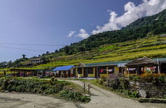 Mountain village in Pokhara, Nepal (phuong.sg@gmail.com) Tags: asia attitude base building cabin chalet everest famous field high hiking hill himalaya home hotel house journey landmark landscape lodging mount mountain namche national nature nepal nepalese nepali outdoor park range residential roof rural scenics sherpa summer sunnyday terraced tibet tibetan tourism town travel valley view village