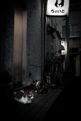 湯田温泉 #2ーYuda Onsen Hot Spring #2 (kurumaebi) Tags: yamaguchi 山口市 fujifilm フジフイルム xt20 湯田温泉 alley 路地 street night 夜